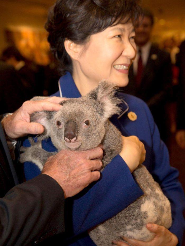 Tổng thống Nam Hàn Park Guen-Hye và con gấu koala
